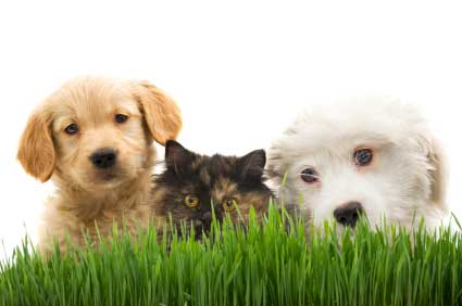 Puppies and a kitten peering over the grass