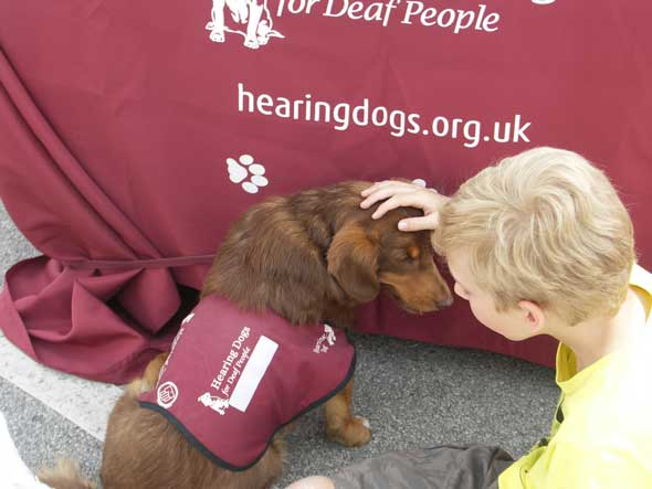 Hearing Dog at our open day
